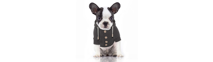 Sweatshirts for Pets